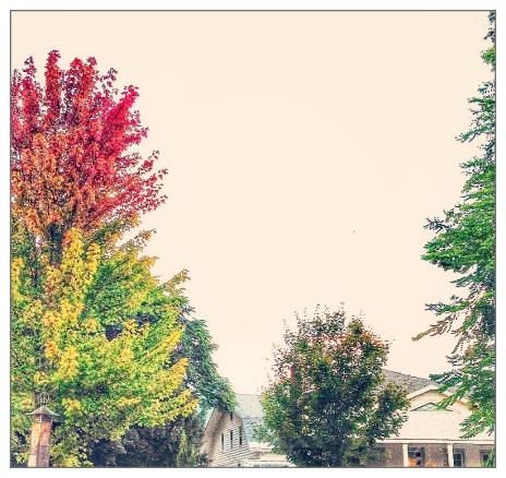 fall_friday_Janice_hoffmann